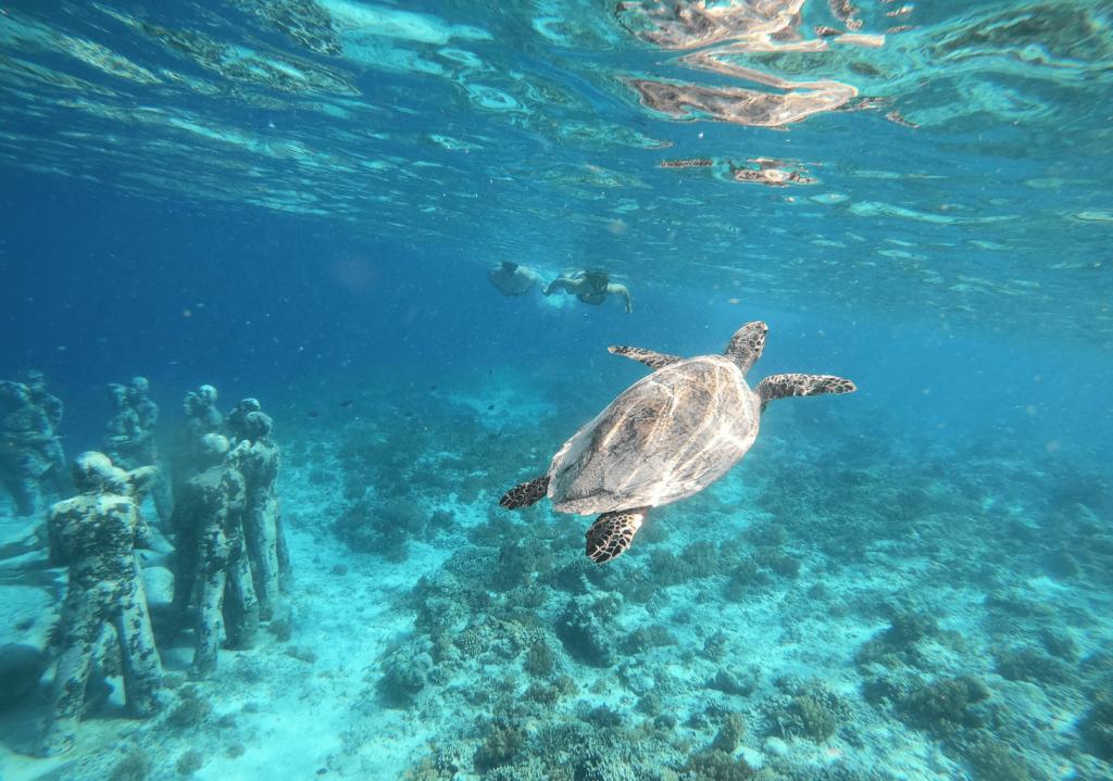 Морские черепахи на Гили